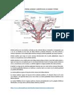 Irrigación arterial venosa y linfática de la vagina y útero