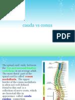 cauda_vs_conus