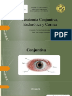 Anatomía Conjuntiva, Esclerótica y Cornea eli