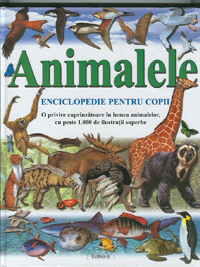 Animale Regnul Animalia