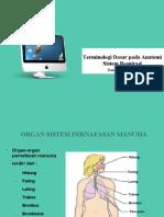 4. Terminologi dasar pada anatomi sistem respirasi