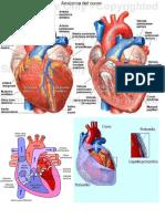 foto del cuore