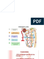 FII- riñon antoamia filtracion (1)