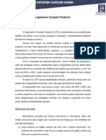 ligamento_cruzado_posterior