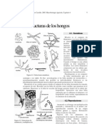 estructuras fungicas