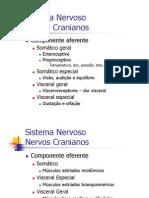 NervosCranianos