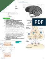 14 P1 - Resumo Farmacologia - Antipsicóticos