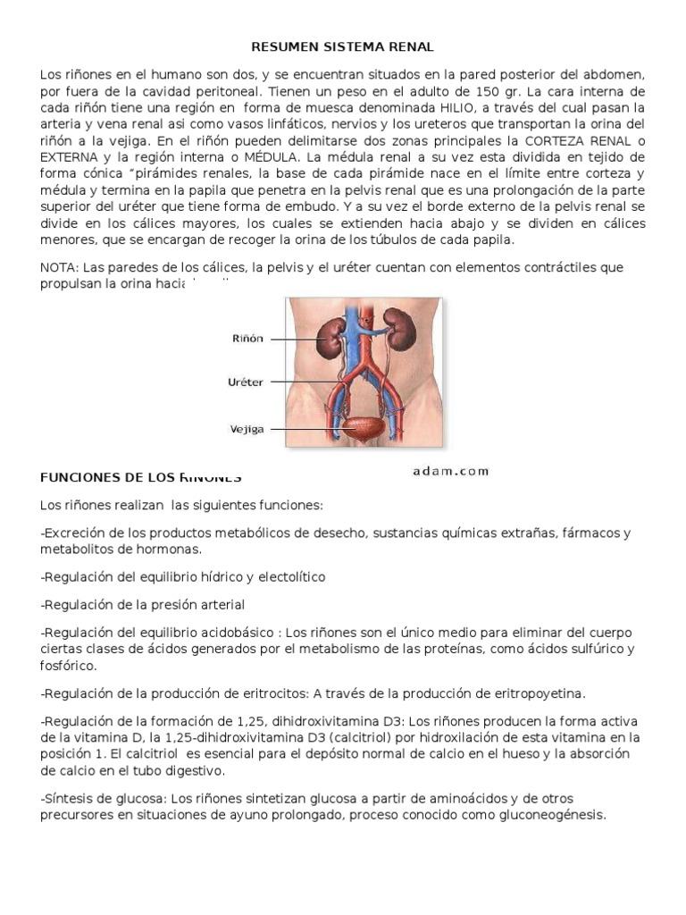 Bonito Anatomía Y Fisiología 1 Notas Fotos - Imágenes de Anatomía ...