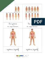 Montessori nomenclature du corps humain