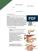 Régulation physiologique du pancréas endocrine