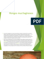 HONGOS+MUCILAGINOSOS