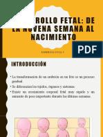 Desarrollo Fetal