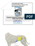 (UST) Anatomia 4