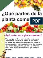 3 Ciencias  plantas comestibles