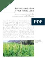 2_Nuove-coltivazioni-della-canapa