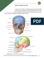 005 Estudo Do Crânio