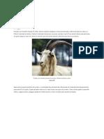 Bode e Cabra - Britannica Escola