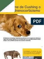 AV_30_Síndrome de Cushing o hiperadrenocorticismo