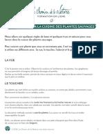 Formation Du Cueilleur - Introduction a La Cuisine Des Plantes Sauvage - Print