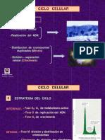 Ciclo_Celular_10