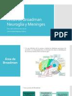 Áreas de Broadman, Neuroglia y Meninges