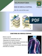 Resumo Medula Espinal