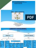 mapa conceptual de genetica y leyes de mendel tema 5