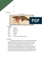 Arthropoda (Anida Khoirunnisa 1908086026)