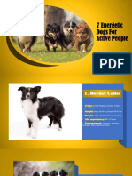 7 Energetic Dogs for Active People