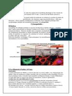 Le-cytoplasme