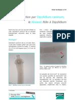 1409-24-infestation_Dipylidium_caninum