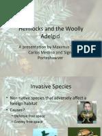Hemlocks and the Woolly Adelgid