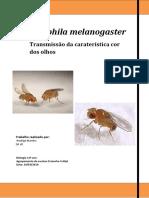 Relatório Final Word PDF (1)