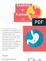 Anatomía DE Estómago