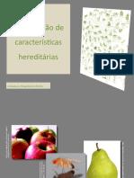 Hereditariedade-Transmissao_de_caracteristicas_hereditarias