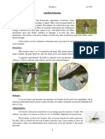 TD2 biologie animale  L1 SVT