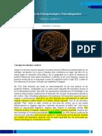 ASIMETRÍAS CEREBRALES LECTURA FUNDAMENTOS_Acervo_1_3 (2)