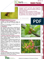 dryocosmus_kuriphilus_yasumatsu__cinipideo_dos_castanheiros