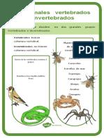 es-sc-53-los-animales-vertebrados-e-invertebrados-hoja-informativa_ver_2