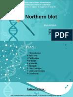 Northern Blot[1]