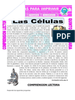 Ficha-Las-Celulas-para-Quinto-de-Primaria