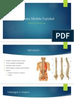 Anatomia Medula Espinhal