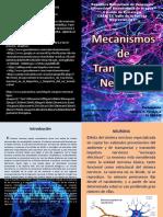 Mecanismos de transmision Neuronal