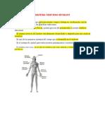 Sistema Nervioso Humano i Sem 2020