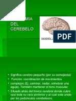 anatomia-del-cerebelo-1209492643693555-8
