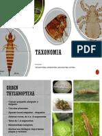 Diptera y otros