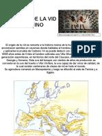 HISTORIA DE LA VID-VINO