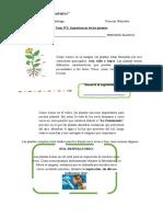 Guía N°2 Importancia de las plantas Ciencias naturales TERCERO BASICO