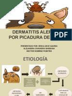 DERMATITIS ALERGICA POR PICADURA DE PULGA (1)