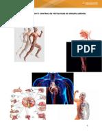Cartilla Anatomia y Fisiologia